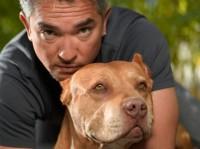 """Su Cielo i consigli per le vacanze di Cesar Millan, istruttore di """"Dog Whisperer"""""""