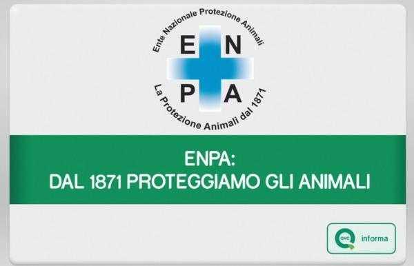 QVC informa ed ENPA insieme per dire no all'abbandono degli animali | Digitale terrestre: Dtti.it