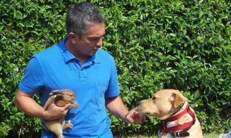 Dog Whisperer, su Cielo i nuovi episodi della 4 stagione   Digitale terrestre: Dtti.it