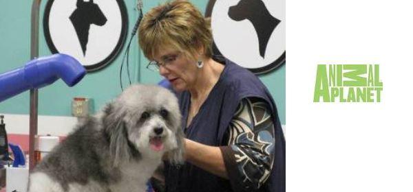 """Dal 1° settembre entrate """"Nella casa di Animal Planet"""" tra parrucchieri per cani ed eroi a quattro zampe"""