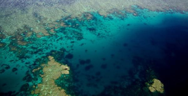 """Su BBC Knowledge va in scena lo spettacolo de """"La Grande Barriera Corallina"""""""