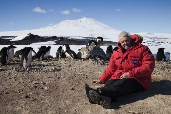 """Su BBC Knowledge, David Attenborough narra """"Il pianeta di ghiaccio"""""""