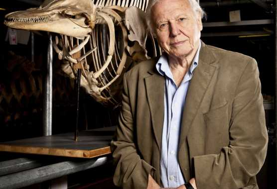David Attenborough: la Natura in TV, da stasera su BBC Knowledge | Digitale terrestre: Dtti.it