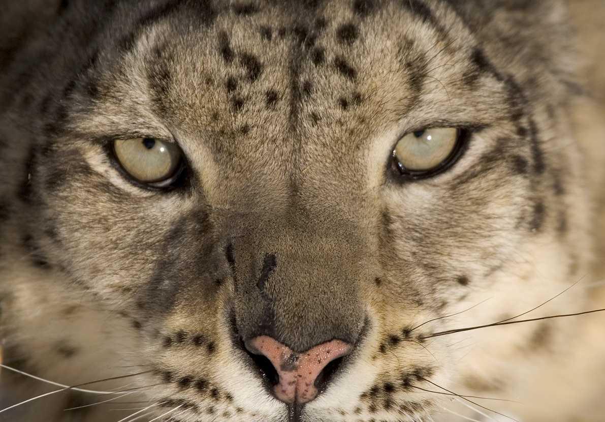 Deadly Top 10: animali letali al via la seconda serie su BBC Knowledge | Digitale terrestre: Dtti.it