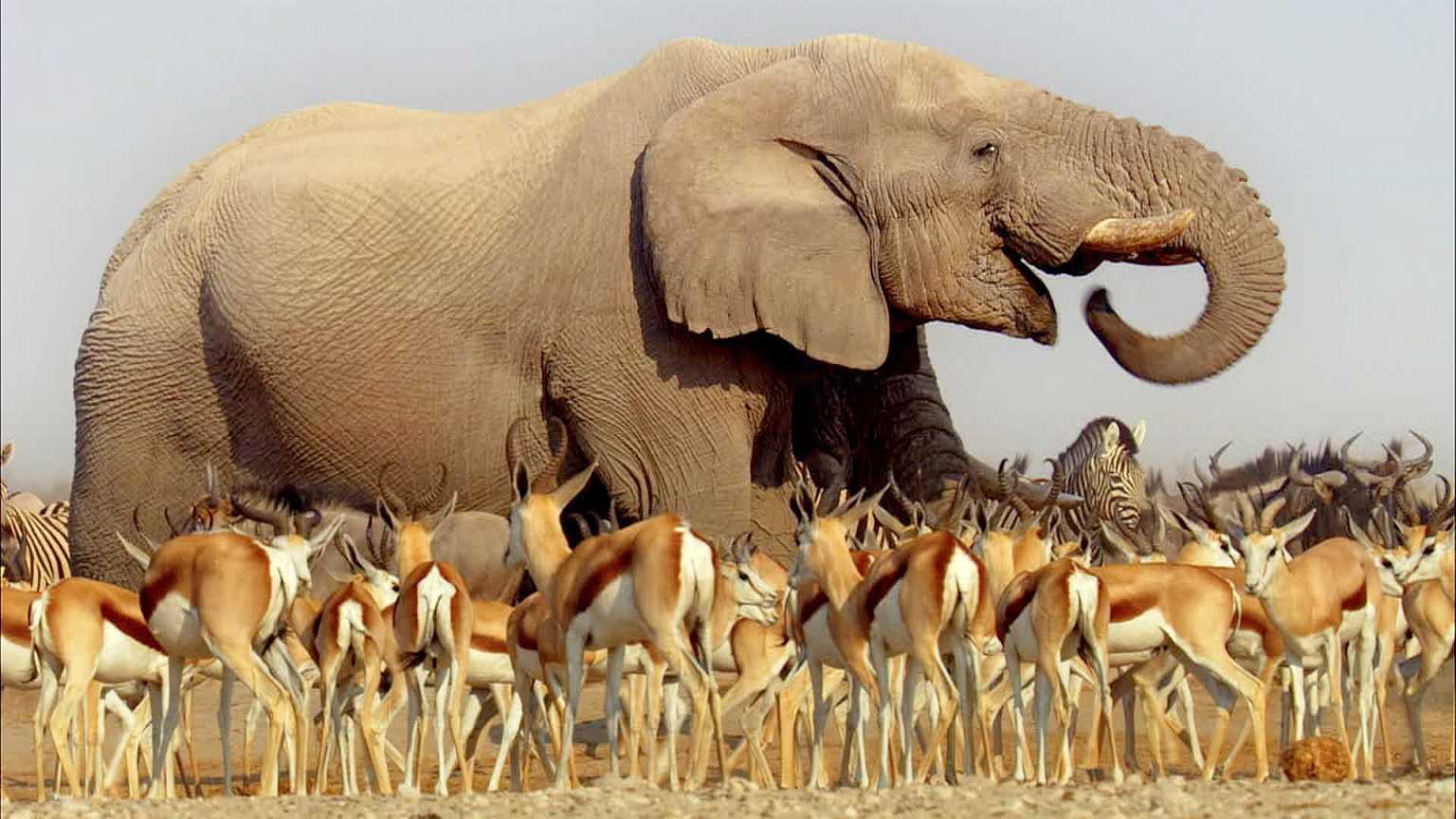 Africa: un viaggio affascinante su BBC Knowledge | Digitale terrestre: Dtti.it