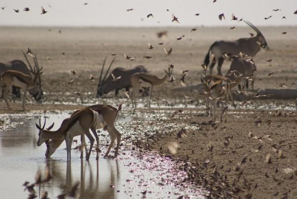 Africa: un viaggio affascinante su BBC Knowledge