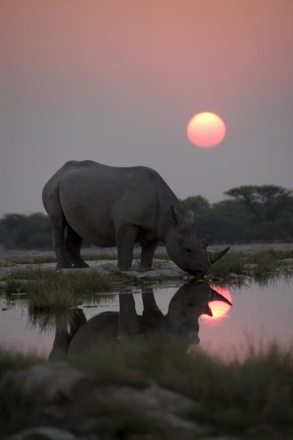 AFRICAEpisode One: Kalahari