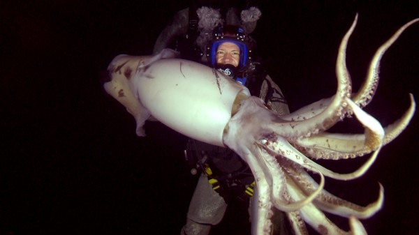 Swimming with Monsters - Squid and Sperm Whales - USA
