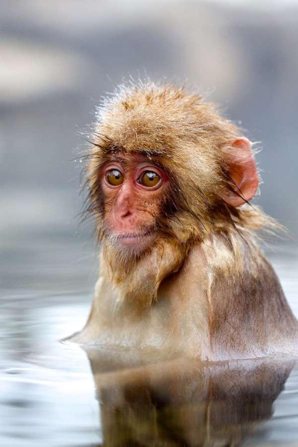 """Su BBC Knowledge """"Le scimmie viste da vicino"""""""