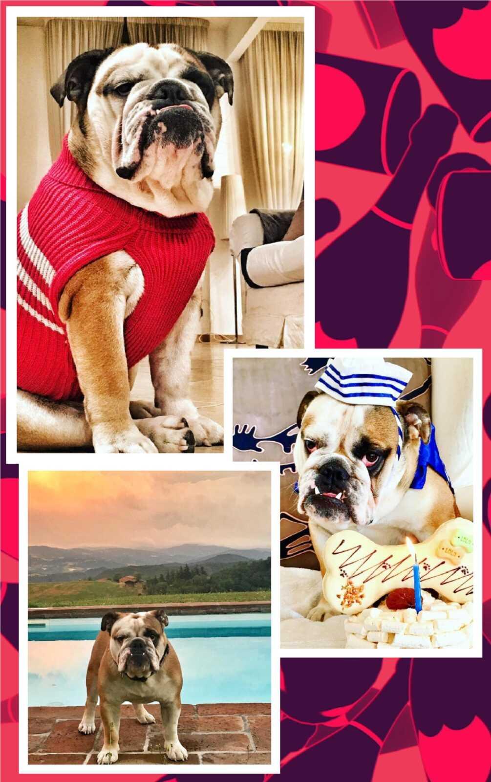 "Su MTV arriva ""#Riccanza! Vita da cani"""