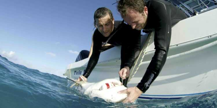 Su Discovery Channel torna la Shark Week con Bear Grylls