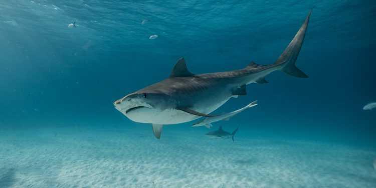 "Torna su Discovery Channel la ""Shark Week"""