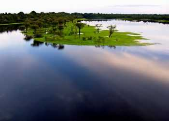 The Amazon rainforest is the largest of the world. It extends over more than five million square kilometers and nine countries.  The Amazon River accounts for approximately one-fifth of the world's total river flow. (Photo Credit: © Christian Baumeister)